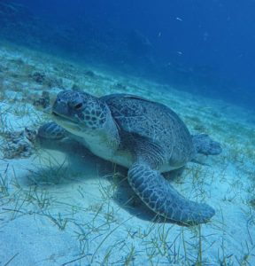 Amazing Turtle Dive